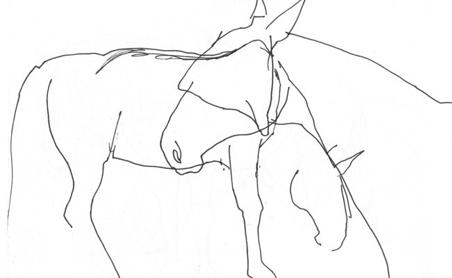 Pferde_Fineliner