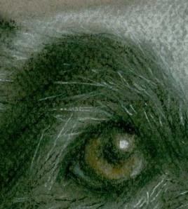 Tierportrait